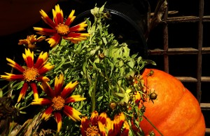 Thanksgiving Day Image with Gaillardia and Pumpkin