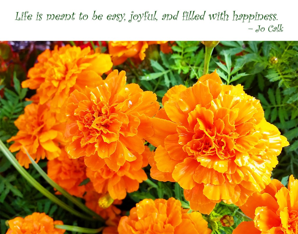Life is meant to be easy, joyful, and filled with happiness. – Jo Calk